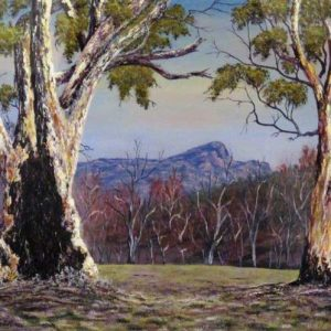 Old Wilpena Gums - $595